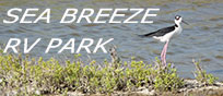Birders will enjoy the many varieties of birds that visit the Corpus area, including the Black-necked Stilt.