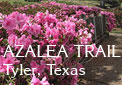 The azaleas are all abloom for this big Tyler, Texas event