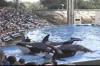 The Stars of the Show at Sea World