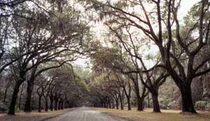 On Oak Road in Savannah