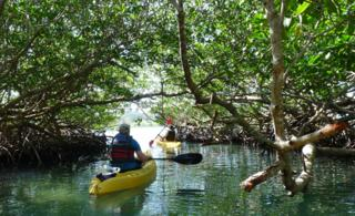 Kayaking at Turquoise Bay in Roatan