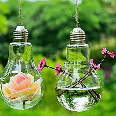 Flowers growing in lightbulbs